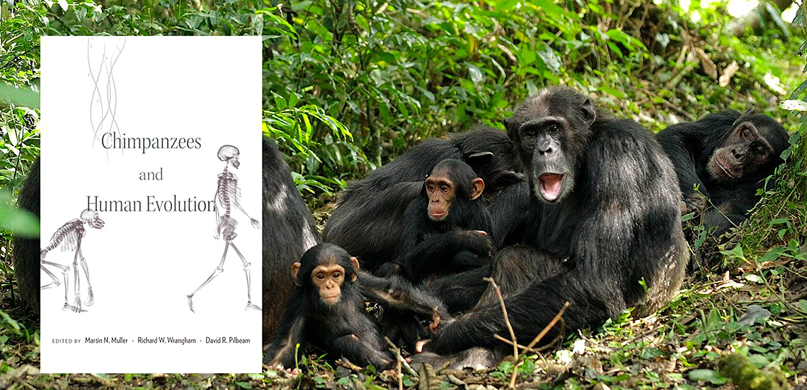 Dr. Martin Muller has just published a new edited book with Harvard University Press. Chimpanzees and Human Evolution systematically compares us with our closest living relatives, attempting to account for the evolution of both similarities and differences.